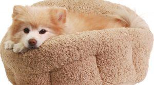 En Ucuz Köpek Yatakları