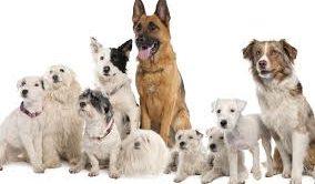 Satılık Köpek Mersin