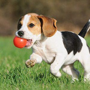 Satılık köpek ilanı vermek