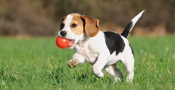 Satılık köpek ilanı verme