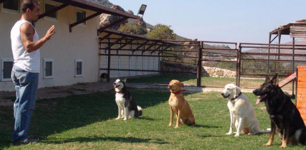Köpek Oteli Ata şehir
