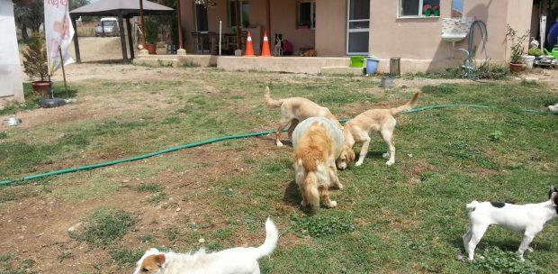 Köpek Oteli Bakırköy