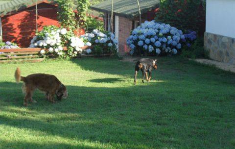 Köpek Oteli Bağcılar