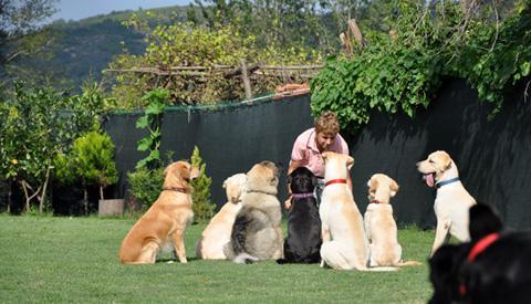 Eyüp Köpek Oteli