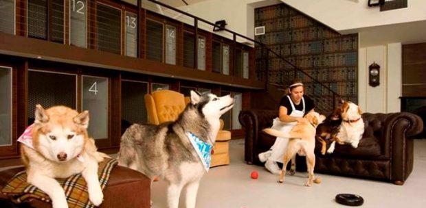 Üsküdar Köpek Oteli
