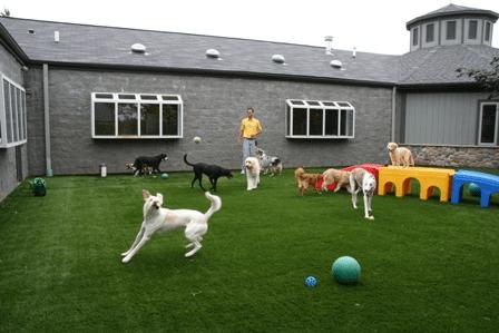 Köpek Oteli Adalar