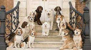 Avcılar Köpek Pansiyonu