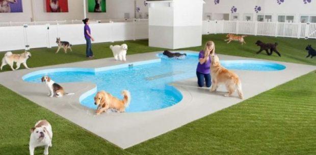 Sancaktepe Köpek Oteli