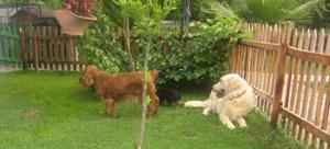 Güngören Köpek Pansiyonu