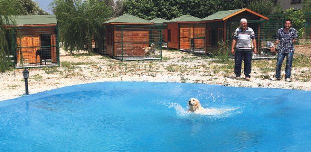 Pendik Köpek Oteli