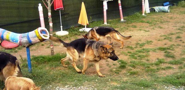 Pendik Köpek Pansiyonu