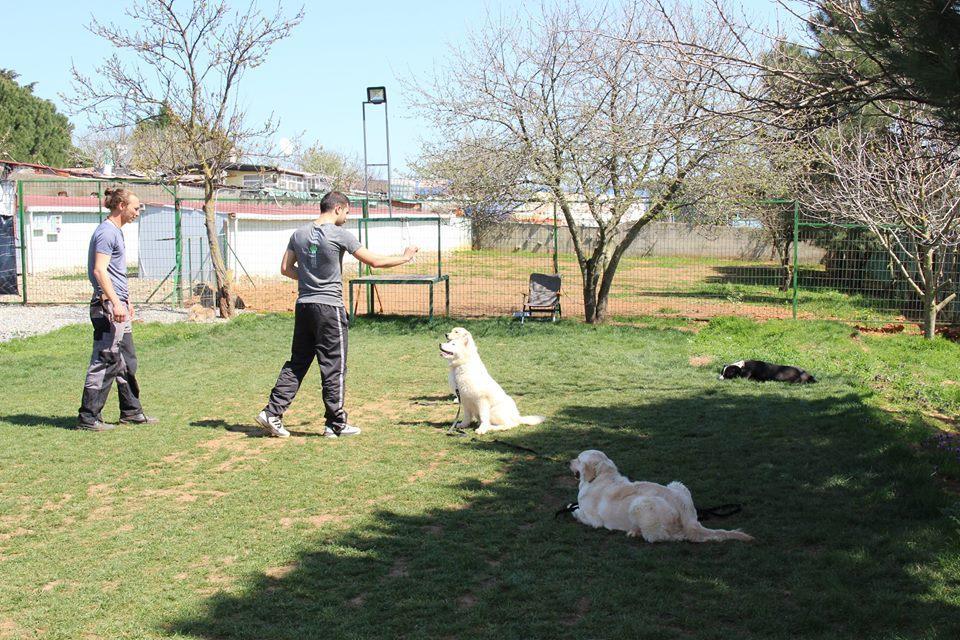 köpek eğitimi evde nasıl verilir