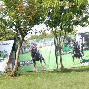 İstanbul Kadıköy Köpek Pansiyonu