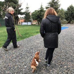 Köpek Pansiyonu Sarıyer Fiyat