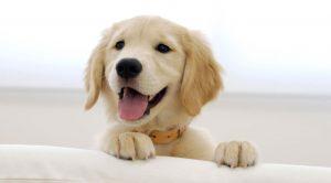 Köpek Eğitim ve Bakım Oteli