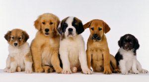 Köpek İsimleri – Erkek ve Dişi Köpek İsimleri
