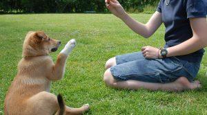 Köpek Eğitimi Evde Nasıl Verilir?
