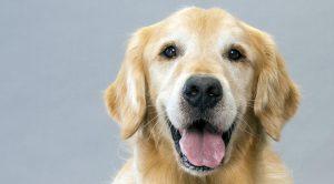 Satılık Köpek Samsun