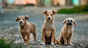 Köpek Pansiyonu – Köpeğiniz Bizimle Güvende