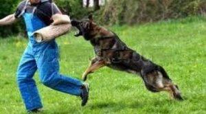 köpek eğitimi fırsatları