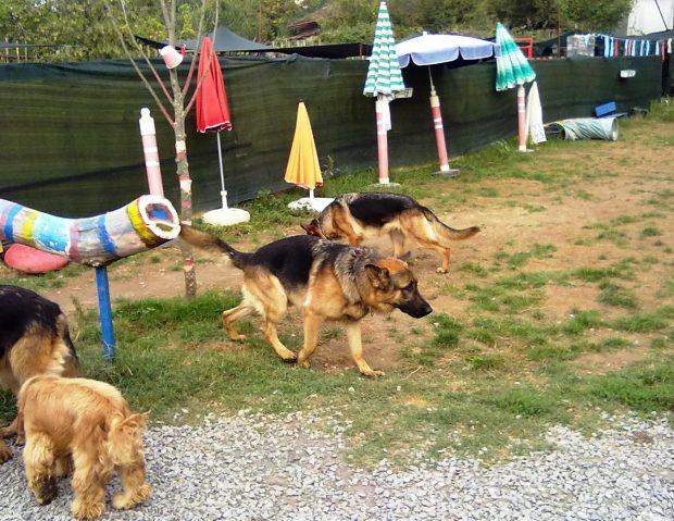 ümraniye köpek oteli