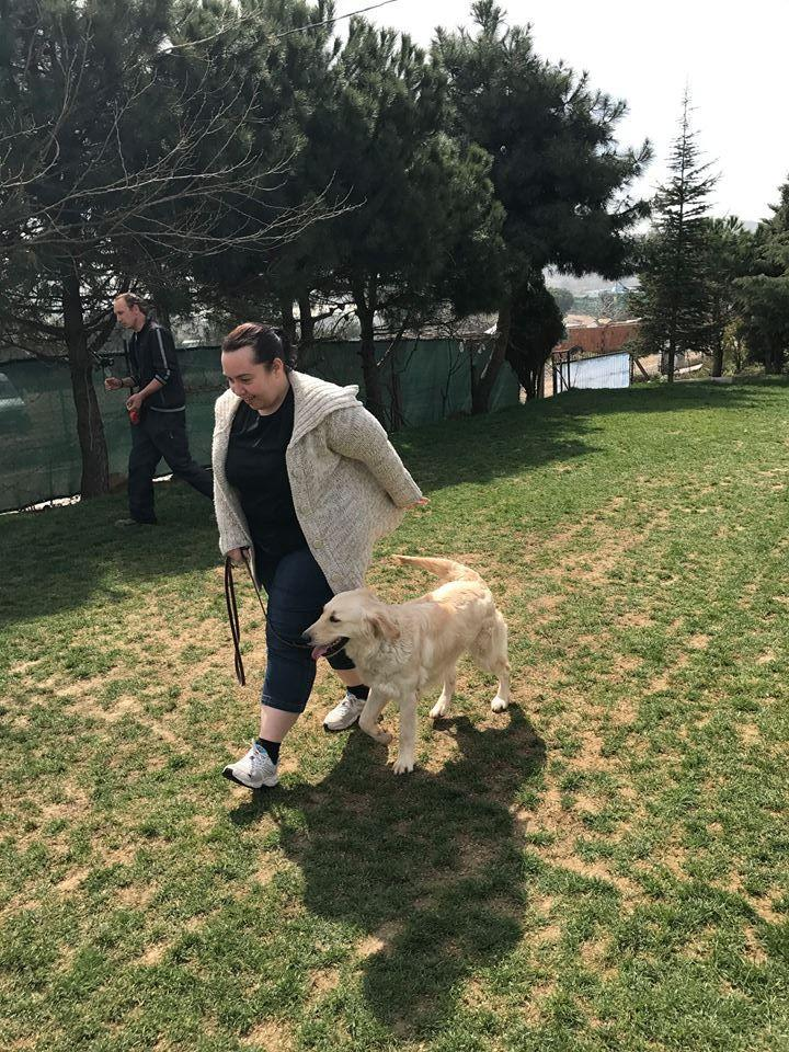 Fatih köpek pansiyonu