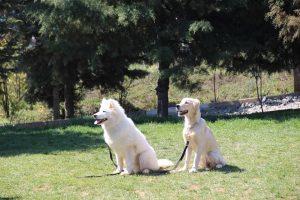 köpek oteli şişli