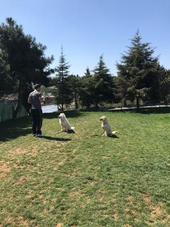 Ataşehir Köpek Oteli