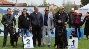 Ataşehir Köpek Pansiyonu İstanbul